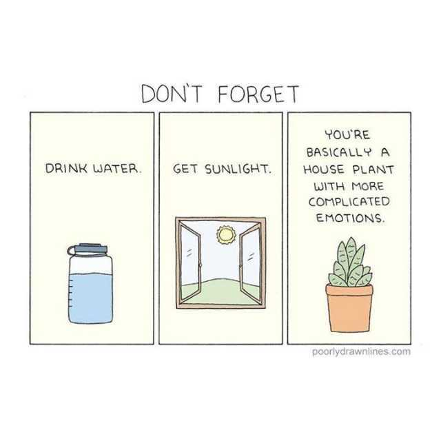 poorlydrawnlines houseplant